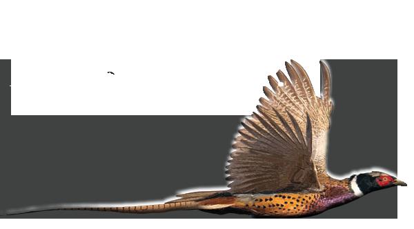 Southern Oregon Pheasant Hunting Ranch