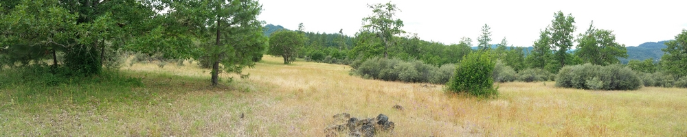 Schedule a private pheasant hunt in Southern Oregon - Medford & Grants Pass, Oregon