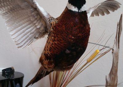 oregon-pheasant-hunting_20160609_162716
