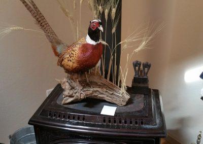 oregon-pheasant-hunting_20160609_162932